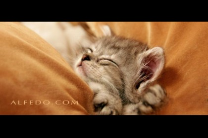 cat-alfedo-photo